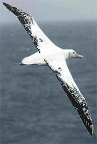 Petites trouvailles Albatros1